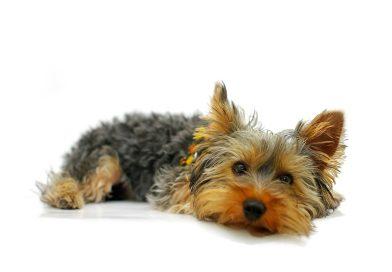 GPS dla psa – czy warto?