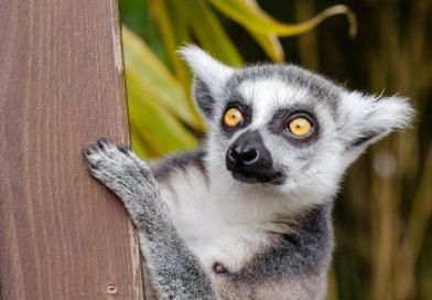 Madagaskar – paszport czy dowód osobisty?